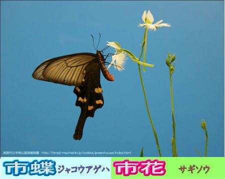 市花「さぎ草」と市蝶ジャコウアゲハ画像