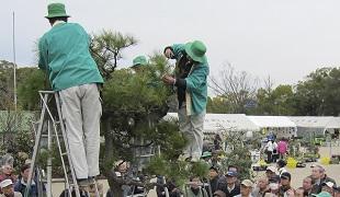 緑化イベントの開催の画像