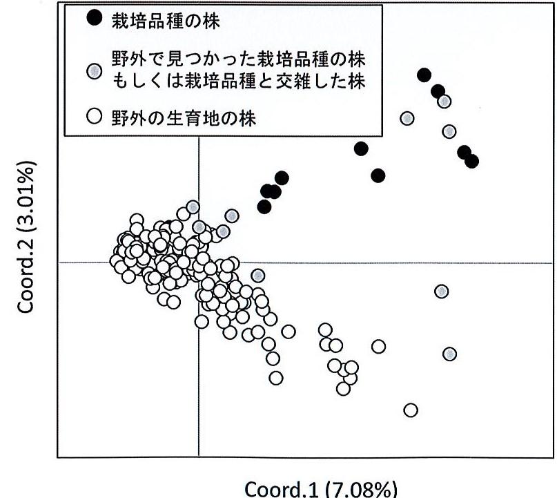 サギソウ遺伝子の解析結果グラフ