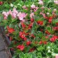 季節の花苗イメージ画像
