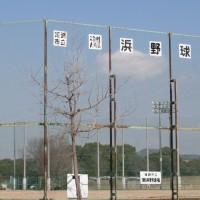 姫路市立灘浜野球場イメージ画像